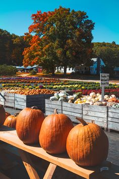 Pumpkin time at the farmer's market. The obligatory decor for the fall. Autumn Cozy, Autumn Trees, Autumn Leaves, Autumn Harvest, Autumn Fall, Pumpkin Farm, Pumpkin Spice, Happy Pumpkin, My Favorite Color