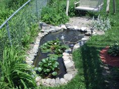 #pond #backyard