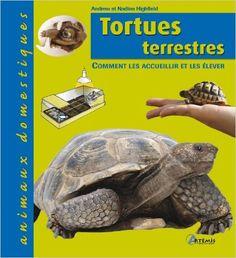 Tortue d'Hermann - Comment déterminer l'age d'une tortue d'Hermann ?