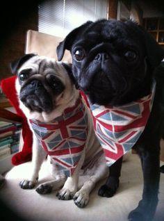 brit pugs for Yasmine Jade Mitchel