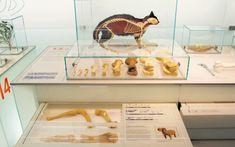 Forscherlabor, Permanent exhibition, Westphalian State Museum for Archeology, Herne, 2005