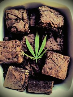 magic brownies
