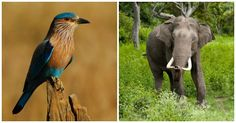 Did You Know That Every State And Union Territory Of India Has A State Animal And A Bird?