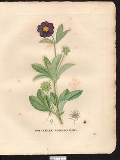 1829 - v.2 - La flore et la pomone francaises - Biodiversity Heritage Library
