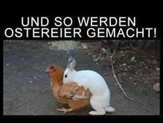 sexy frohe ostern