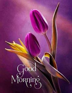 Good Morning Flowers Pictures, Good Morning Picture, Morning Pictures, Flower Pictures, Good Morning Happy Sunday, Good Morning Coffee, Good Morning Greetings, Good Morning Wishes, Rumi Love Quotes