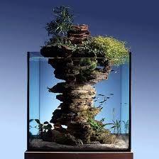 Bildergebnis für aquarienzimmer