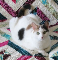Beautiful cat on a quilt--omg this looks like my cat