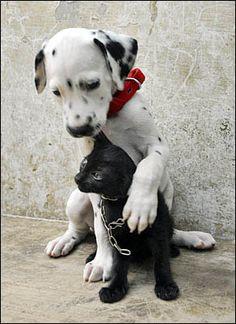 love animals - Pesquisa Google