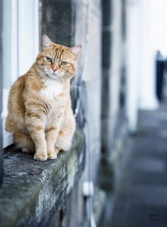 Cat on the watch by Bildbrus.se on YouPic