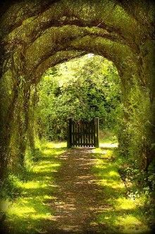 Tree Tunnel Gate, Wales -open the gate & walk through