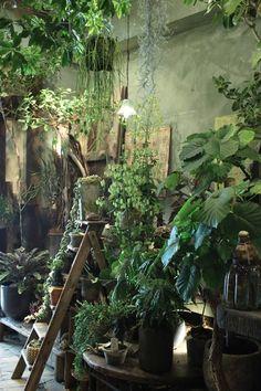"Houseplants - 25 houseplants for your urban jungle House raccoon Haus Waschbär. - Houseplants – 25 houseplants for your urban jungle House raccoon Haus Waschbär""> Houseplants – 25 houseplants for your urban jungle House raccoon,"