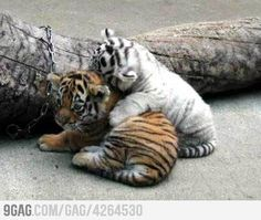 Friendship.. it doens't matter what color you are