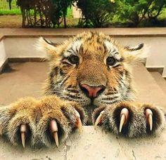Woah! Look at those claws!