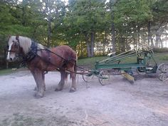 Amish grading the driveway with 2 working horses.