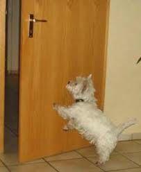 Hundetrick: Tür zu !