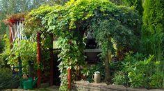 GRØNT TAK: Mange drømmer om en takterrasse dekket av vakre slyng- og klatreplanter | LEV LANDLIG