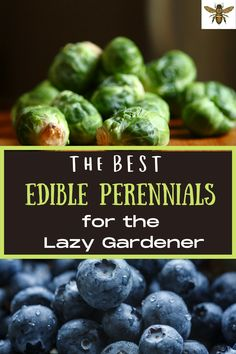 How would you like to have edible perennials from your backyard, year after year, after planting them just once? That's the beauty of edible perennials! Let me show you how to grow them and the best perennials for the lazy gardener! Gardening Hacks, Organic Gardening Tips, Real Food Recipes, Healthy Recipes, Best Edibles, Best Perennials, Fast Growing Plants, Grow Your Own Food, Herbal Medicine