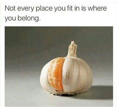 That is orange and garlic Pictures With Deep Meaning, Meaningful Pictures, Creative Photos, True Words, Food For Thought, Meant To Be, Garlic, Funny Memes, Funny Pics