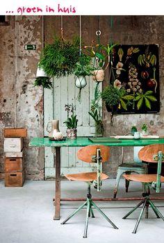 VT wonen: GROEN LUCHTTHEATER Waarom zou je planten alleen netjes op tafel neerzetten als je ze ook op kunt hangen? Daar hoef je echt niet alleen hangplanten voor te gebruiken. Ook planten als varens en orchideeën kunnen aan een dun touw of koord in de lucht acrobatische kunsten vertonen. Het effect: een beetje retro, maar dan op een eigentijdse manier.