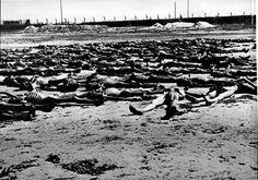 Bergen-Belsen, Germany, April 1945, Corpses of prisoners.