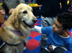 12 Photos of Therapy Dogs Providing Comfort After Tragedies   Mental Floss