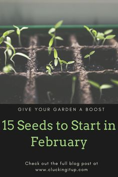 Seed Starting 15 Seeds to Start in February, what to plant in February, seed starting Growing Tomatoes, Growing Plants, Growing Vegetables, Starting A Garden, Seed Starting, Gardening Zones, Gardening Tips, Gardening Supplies, Container Gardening