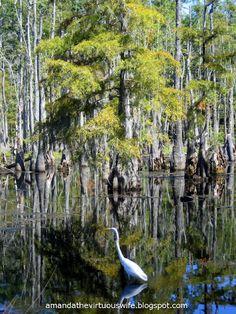 Louisiana Louisiana Louisiana