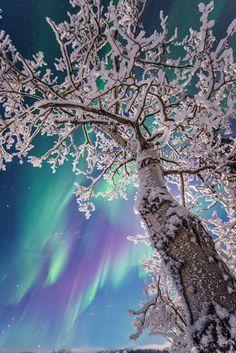 "opticxllyaroused: ""Northern Lights by Jonathan Tucker """