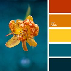 bright color of yellow tulip, color of honey, color selection, color solution, contrasting combination, dark sea-green color, dark turquoise, deep blue, deep blue and orange, orange and yellow, red and orange, shades of tulips