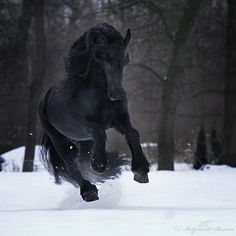 Black horse -  incredibly Beautiful