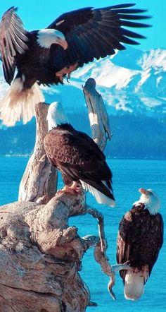 Zoo Animals, Funny Animals, Bald Eagles, Animal Kingdom, Animals Beautiful, Wisconsin, Butterflies, Wildlife, Creatures