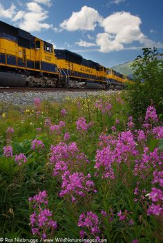 Stock Photos of Alaska Railroad in Seward, Alaska, by Alaska photographer Ron Niebrugge News Around The World, Around The Worlds, Seward Alaska, Alaska Railroad, Train Pictures, Midnight Sun, Wild Flowers, Paths, Travel Plan