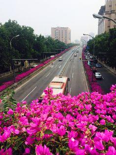 广州也算的上花都了!