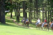 BARREN RIVER LAKE STATE RESORT PARK, KY - Campground & Camping Details - ReserveAmerica - [KY]