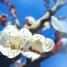 Felicitare animata de Florii cu mesajul Pentru ca esti o persoana deosebita si cineva pe care pot conta, profit de aceasta ocazie pentru a-ti ura multa fericire de ziua numelui tau si intodeauna! La multi ani! http://ofelicitare.ro/felicitari-de-florii/urare-de-florii-507.html
