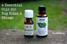 Essential Oils for Bug Bites - GreenBootLiving