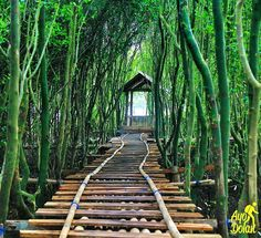 Society built Jembatan Api-Api walkway in Congot Mangrove Forest for coastal rehabilitation closer to public Cool Places To Visit, Great Places, Places To Travel, Beautiful Places, Bali, Natures Path, Mangrove Forest, Nature Pictures, Ubud