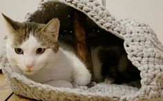 Natasja van DaWanda en DIY Eule laat je hier zien hoe je een comfortabel holletje voor je kat kunt haken met jersey garen.