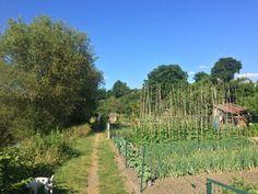 Autun. Jardins familiales au bord d'Arroux.