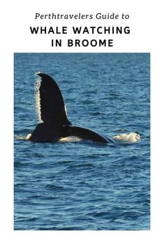 The Best Broome Whale Watching Tour Visit Australia, Australia Travel, Western Australia, Broome Australia, Whale Watching Season, Whale Watching Tours, New Zealand Travel, Mexico Travel, Spain Travel