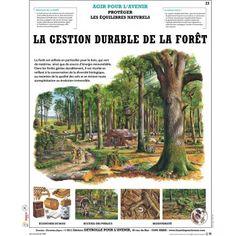 La gestion durable de la forêt