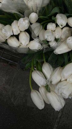 Classy Aesthetic, White Aesthetic, Aesthetic Pastel, White Tulips, White Flowers, Fresh Flowers, Flower Aesthetic, My Flower, Aesthetic Pictures