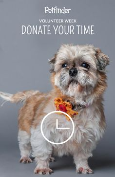 The best way to help shelter pets (other than giving them a forever home yourself!) is by volunteering your time. Many shelters need help cleaning, playing with and caring for animals, and keeping the facility in good condition. Even a few hours can make a huge difference.