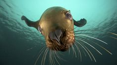 animals that are free   Free Download animals amazing high definition quality ocean life free ...