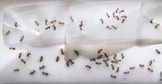 die besten 25 diy fliegenfalle ideen auf pinterest kleine schwarze ameisen essig gegen. Black Bedroom Furniture Sets. Home Design Ideas