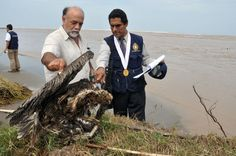 Dead dolphins, pelicans wash ashore in Peru. This is scary stuff!