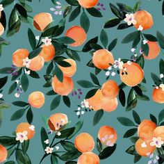 Dear Clementine oranges - teal fabric by crystal_walen on Spoonflower - custom fabric GIFT WRAP Orange Mode, Teal Orange, Baby Orange, Dark Teal, Yellow, Teal Fabric, Floral Fabric, Cotton Fabric, Orange Fabric