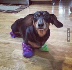 Master has given weenie a sock. Weenie is free.