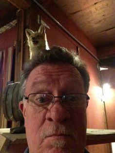 Fox looking over my shoulder!